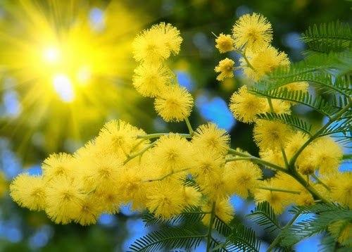Ну вот и МАЙ совсем скоро покинет нас...На пороге Лето , и оно к нам приходит с новыми цветами, солнышком и теплом. Наконец-то сбудутся все наши заветные желания, наступит пора долгожданных отпусков. Желаем вам отличного настроения, крепкого здоровья, при