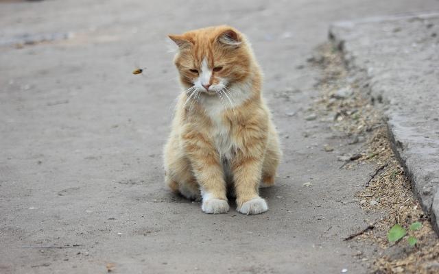 ПОСЛЕДНИЙ ДАЧНИКВсё лето кот был замечательным...