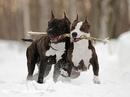 Как бы люди не клялись в верности, кроме собаки никто про верность не знает.