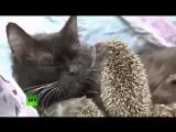Котейка и ёжики