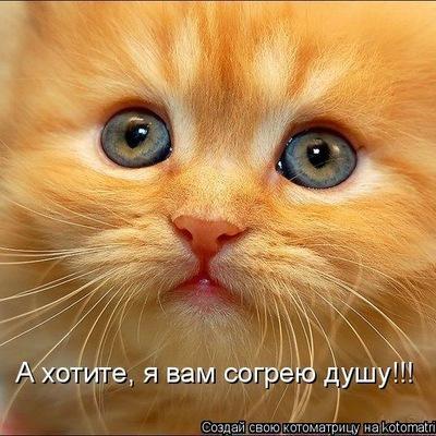 Даша Шишкина, 11 марта , Бердичев, id226936289