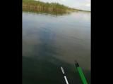 rus_fish_video_1538767750496.mp4