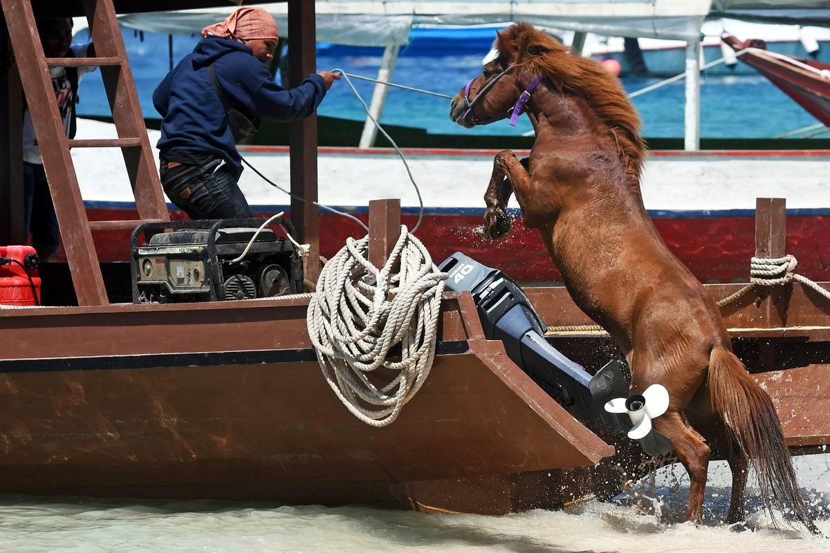 Укрощение строптивого: Морской конек и его наездник