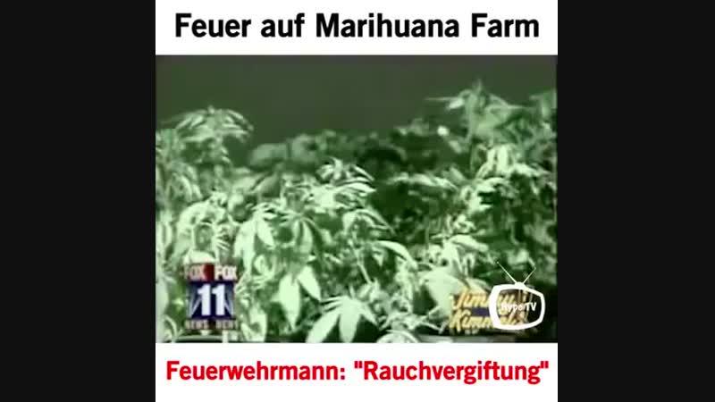 Fire on marijuana farm - Firefighter: smoke poisoning