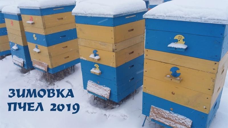 Зимовка пчел Как достичь хорошей зимовки пчел