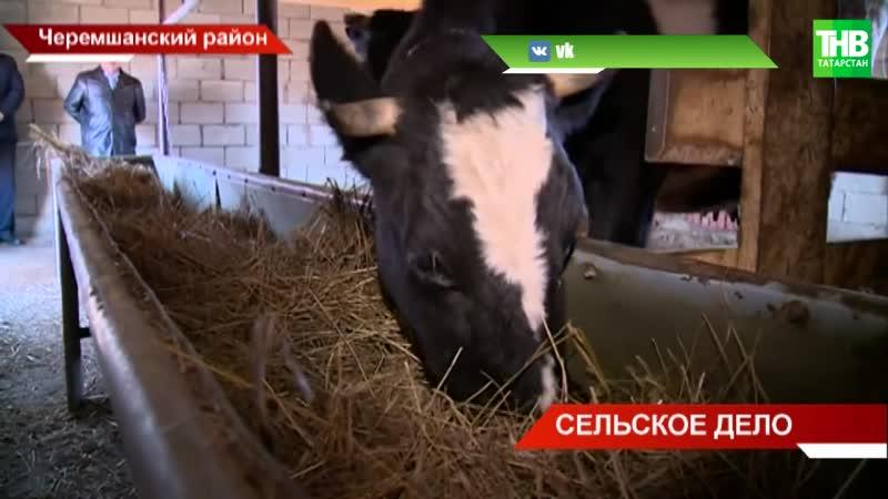 Чем вызван бум мини-ферм в Черемшанском районе ТНВ