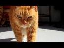 Meow Na Mah Na - Kitty Music Video