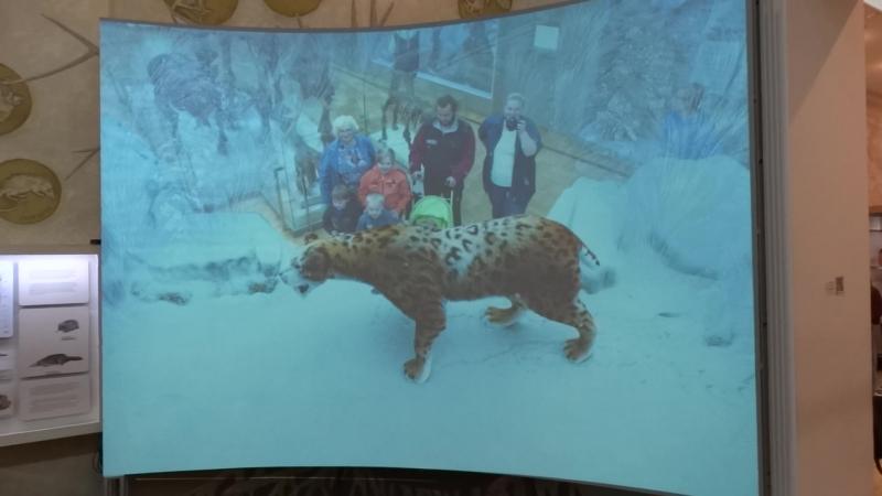 Интерактивная встреча с саблезубым леопардом