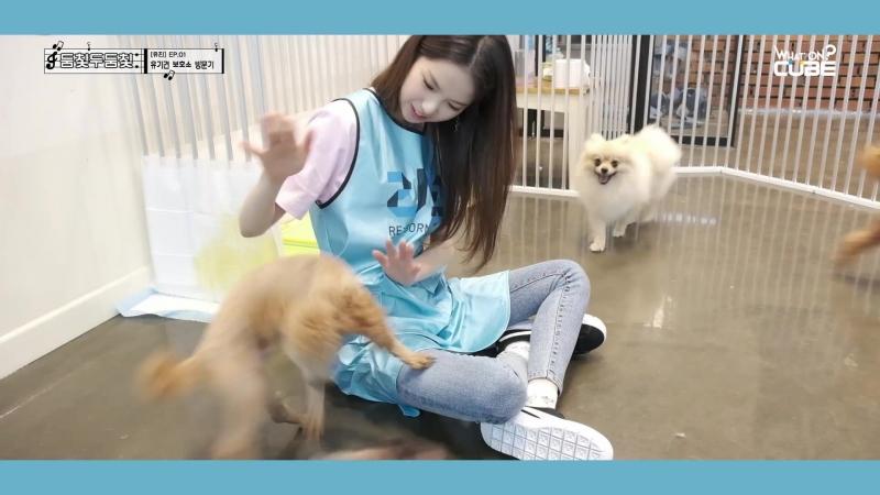 CLC - 둠칯두둠칯 [유진] EP.01 유기견 보호소 방문기