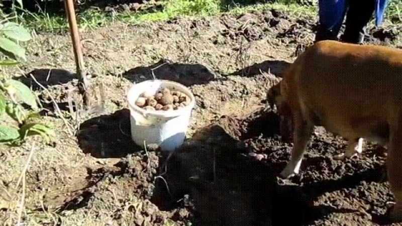 А шо делать кому то же надо убирать картоху а то все в инете сидят