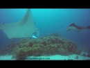 Manta Diving Trip by South Ari Dive / Mala Boutique Dhangethi