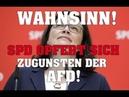 Wahnsinn! SPD opfert sich zugunsten der AFD!