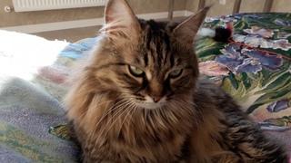 Почему кошка не живет с МИЛИ ВАНИЛИ! ОБЗОР МЕБЕЛИ ИКЕА
