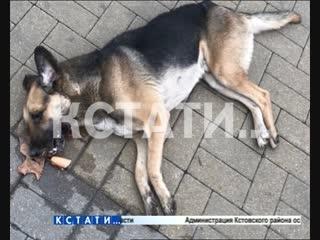 Живодерская парочка - молодой человек с девушкой убивают собак у всех на глазах
