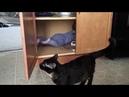 Супер кот-Смешное видео про котов