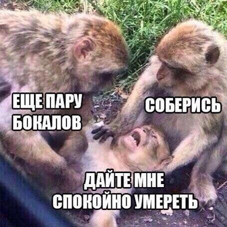 https://pp.vk.me/c7009/v7009105/7d50/eohVwA4kdmk.jpg