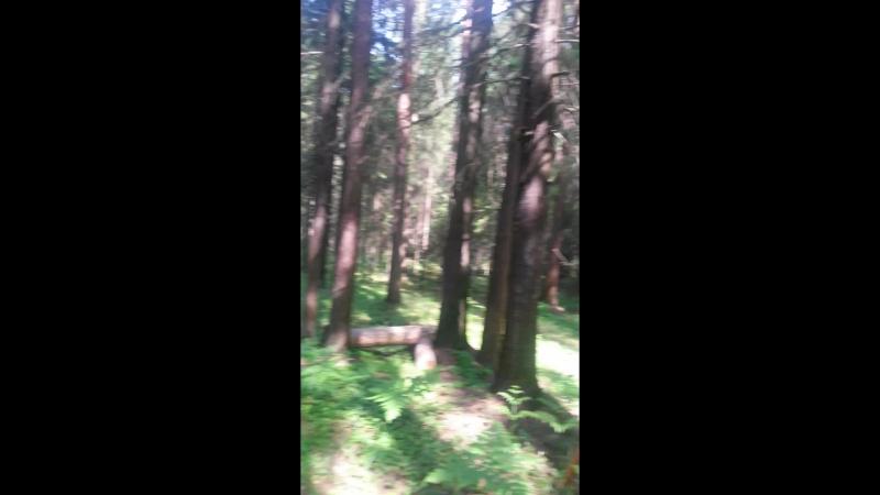 горка в лесу. свойдом своимируками загородныйдом дом лес детскаяплощадка