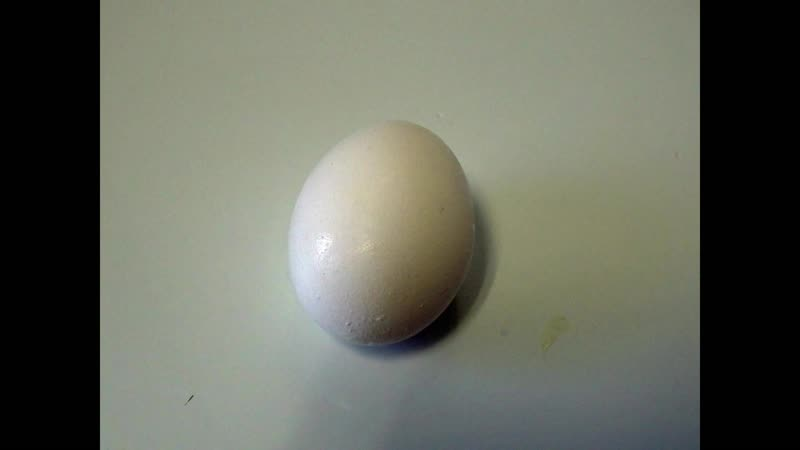 Observation of the Development of Chick Embryo