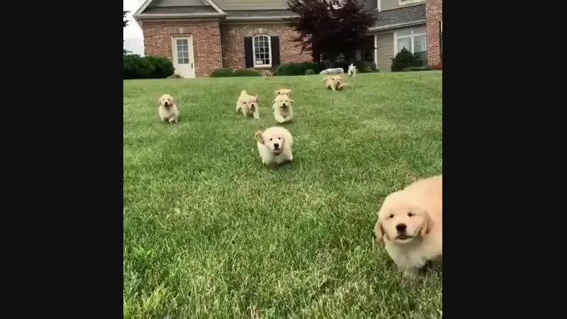 Забег пёсиков