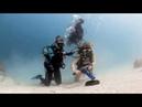 Подводное бесконтактное УЗИ беременным мантам / Pregnant manta rays provide proof of first contactless underwater ultrasound