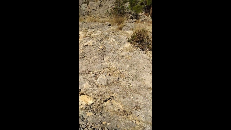 По скале с императорского пляжа в тысячелетнюю можжевеловую рощу