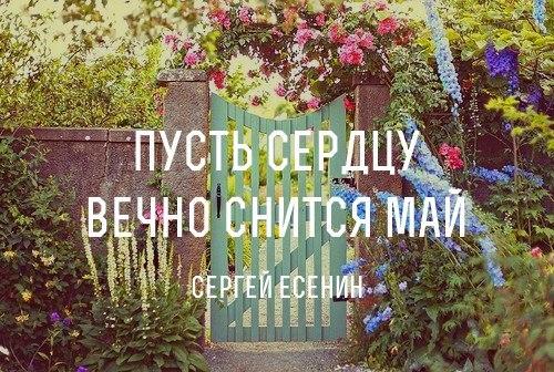Пусть сердцу вечно снится май стих
