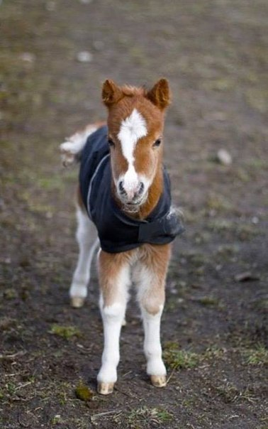 Очаровательный жеребенок в свитерке