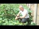 Доктор Попов лечение гемороя огурцом