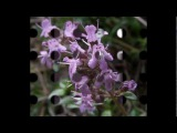 Sandy Denny Fotheringay - Wild Mountain Thyme