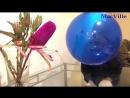 MacVille - Toys R Us Blue Balloon - Blowing a Big Balloon