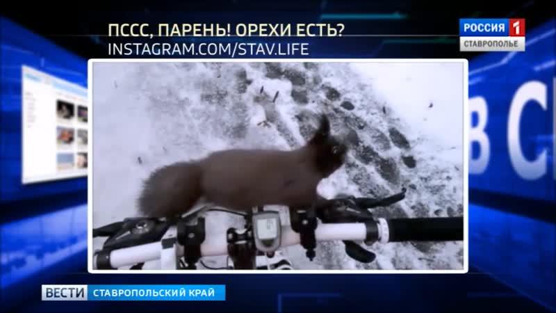 Вести в сети 310 Собачий конфликт беличий досмотр и пернатый променад