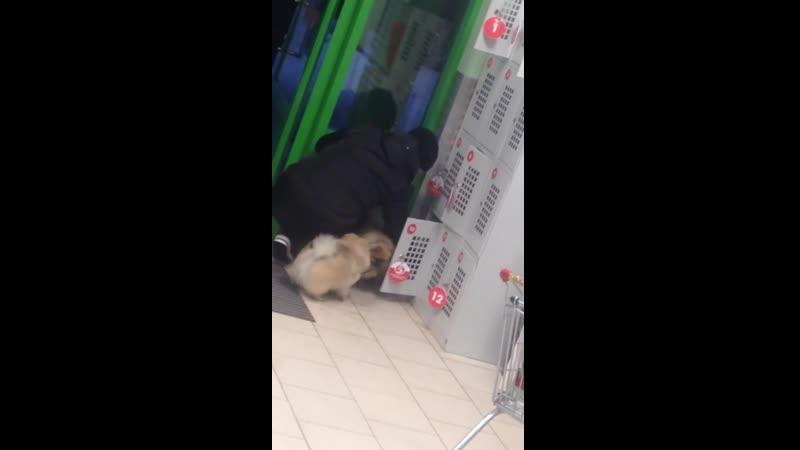 Засунула собак в камеру хранения