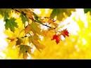 Жаркие поцелуи осени