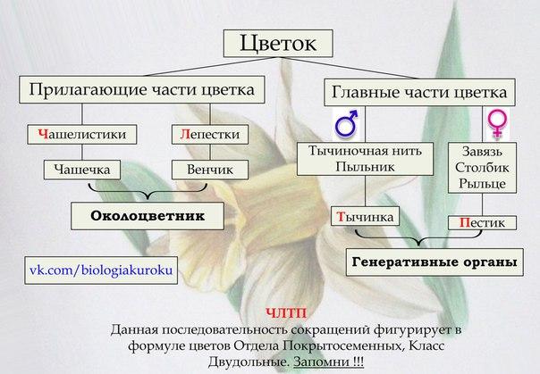 Схема 1.1.1.