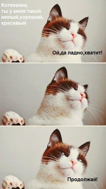 Красивые и профессиональные фото котов -IyEsOiQq0M