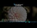Richard Bass - Armonica (Original Mix) [Music Video] [Progressive House Worldwid