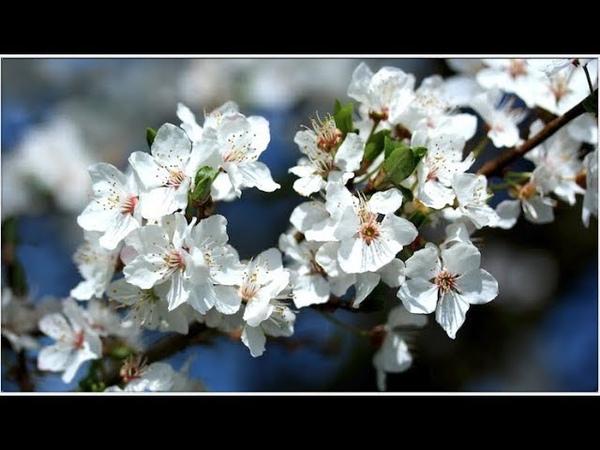 Спокойная Музыка Для Снятия Стресса - RELAXING PIANO - Music - Белый Шум / Stress Relief Music