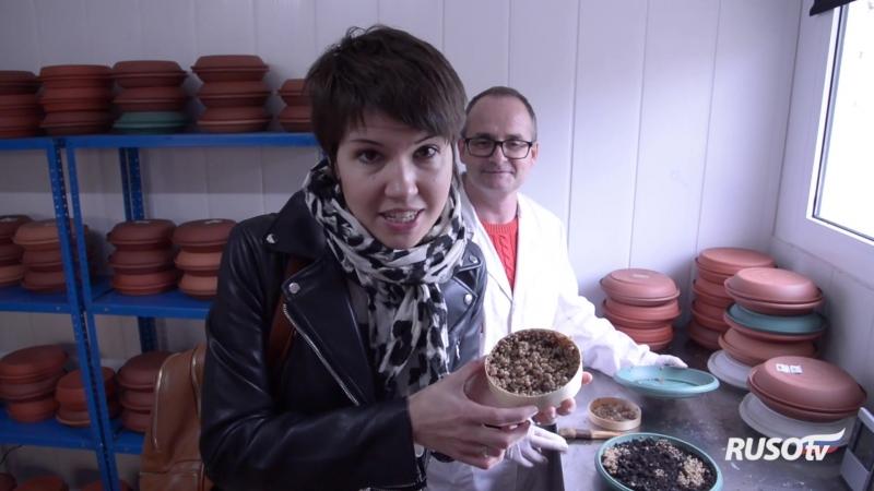 Улитки в Испании: где их выращивают и как едят?