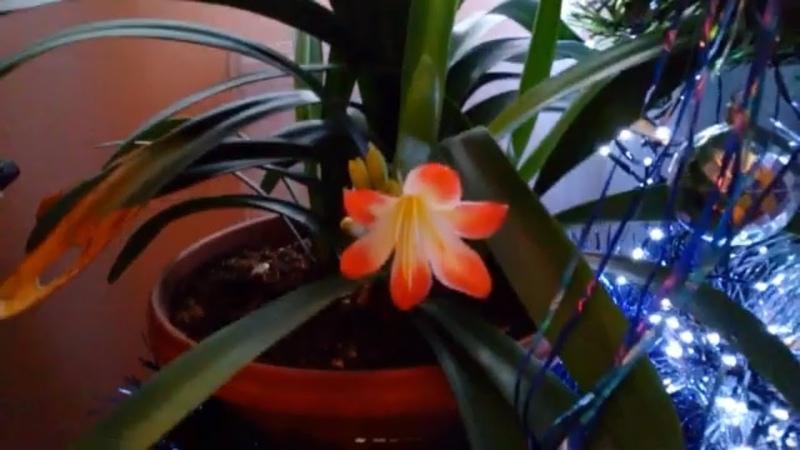 Мои цветы 💐 / Вакууматор / Готовлю гуляш / Кормлю животных