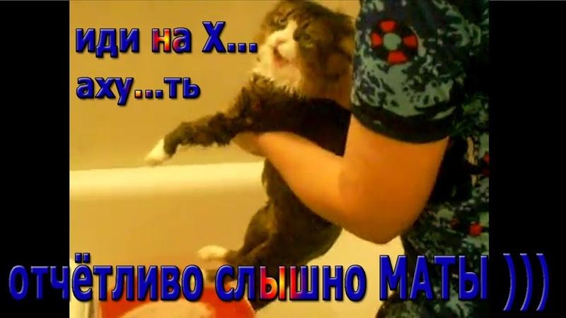 Кот матерится четко говорит иди на х