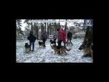 дрессировка ворзель 07-12- 2013 первый снег