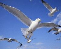 Моя мечта - стать птицей.  Не чтобы полетать, или забыться.