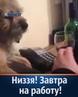 """Блокнот Новости on Instagram """"позитив_блокнот В новогодние праздники собака оказалась не только настоящим, но просто незаменимым другом человека...."""