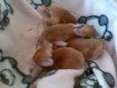 Крольчата в Бакс Банни