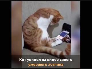 Кот увидел на видео своего умершего хозяина