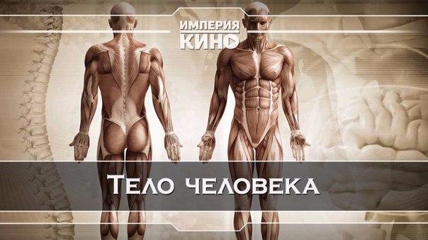Тело человека (1998)