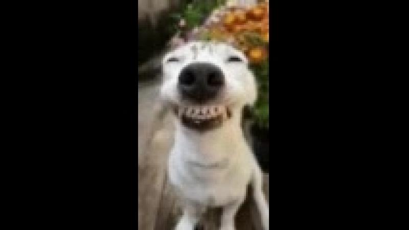 зубы такие