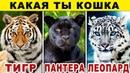 Тест КАКАЯ ТЫ КОШКА Какой ты Хищник из Семейства Кошачьих Невероятный тест на ХАРАКТЕР Точность