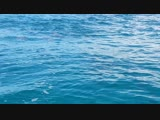 Дельфины. о.Занзибар