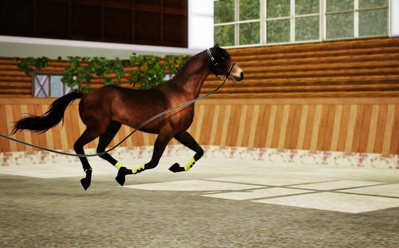 Регистрация лошадей в RHF 1.1 - Страница 4 Bbx76lL7_T8